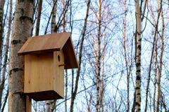 在一棵树的鸟舍在一个早期的春天桦树森林里 免版税库存图片