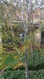 在一棵树的鸟舍在庭院里 图库摄影