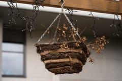 在一棵树的鸟舍在森林公园,鸟的手木风雨棚能度过冬天 免版税库存照片