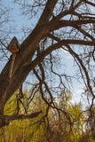 在一棵树的鸟舍在森林公园 免版税库存图片