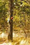 在一棵树的鸟舍在森林里 免版税库存图片