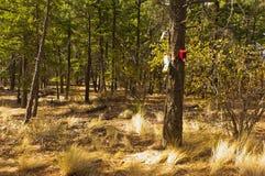 在一棵树的鸟舍在森林里 免版税库存照片