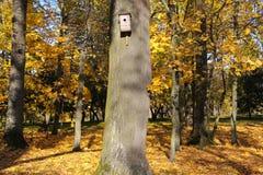 在一棵树的鸟舍在秋天公园 库存图片