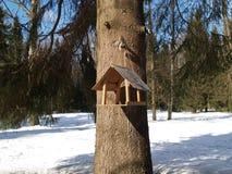 在一棵树的鸟饲养者在冬天木头 库存照片