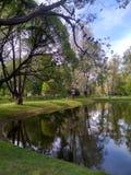 在一棵树的鸽子在池塘上在一个晴朗的夏日 库存照片