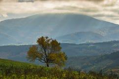 在一棵树的阴暗天空在一个草甸秋天,山Goc 库存图片