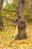 在一棵树附近的伞在秋天公园 免版税图库摄影