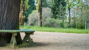 在一棵树附近的长凳在公园 图库摄影