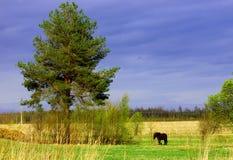 在一棵树附近的黑马在风雨如磐的天空的背景 免版税库存图片