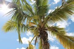 在一棵棕榈树的光亮的太阳在一个热带海滩在加勒比 免版税库存照片