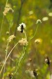 在一棵植物的两个臭虫领域的 免版税库存照片