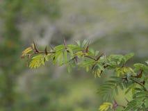 在一棵植物的刺在森林 库存图片