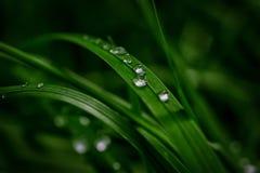 在一棵深绿草的美好的雨露滴在太阳光离开 自然背景特写镜头 复制空间 设计gre的模板 库存图片