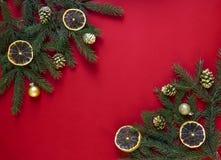 在一棵用金黄锥体、干桔子和球装饰的红色背景绿色冷杉分支在两个角落 免版税库存图片