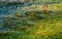 在一棵结霜的草的下落的叶子 库存照片
