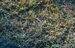 在一棵结霜的草的下落的叶子 免版税库存图片