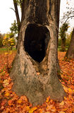 在一棵老树的凹陷 库存照片