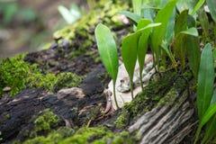 在一棵老树的年轻新芽 免版税库存图片