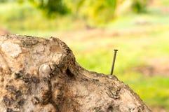 在一棵老树的老大头钉 库存照片