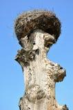 在一棵老树的起重机巢 免版税库存照片