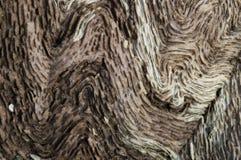 在一棵老橡木的扭转的样式 免版税库存照片