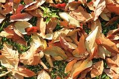 在一棵草的五颜六色的秋天干燥叶子在一个森林里在一个晴天 库存照片