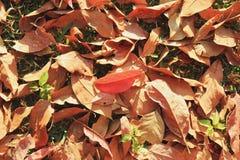 在一棵草的五颜六色的秋天干燥叶子在一个森林里在一个晴天 免版税库存照片