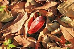 在一棵草的五颜六色的秋天干燥叶子在一个森林里在一个晴天 库存图片