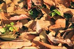 在一棵草的五颜六色的秋天干燥叶子在一个森林里在一个晴天 免版税库存图片