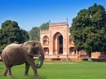 在一棵草的大象在对Itmad-Ud-Daulah的坟茔(婴孩Taj)的门前在阿格拉,北方邦,印度 库存图片