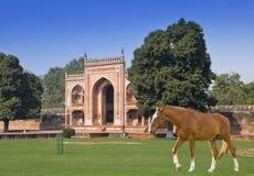 在一棵草的马在对Itmad-Ud-Daulah的坟茔的门前在阿格拉,北方邦,印度 图库摄影