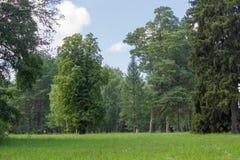 在一棵落叶和针叶树树中的沼地在公园 库存图片