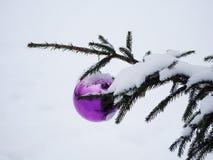 在一棵街道树的紫色圣诞节球在雪下 免版税库存照片