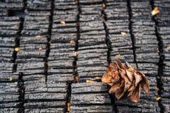 在一棵被烧的树的树干的背景的锥体 免版税库存图片