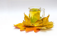 在一棵透明杯子介于中间的秋天槭树的茶离开 库存图片