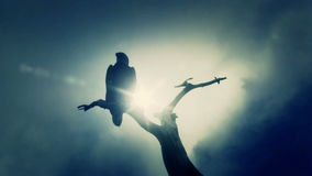 在一棵死的树的美国白头鹰就座在一冷的多云天