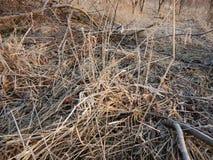 在一棵冻草的早晨霜 库存照片
