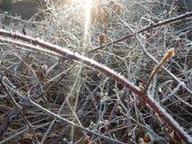 在一棵冻草的早晨霜 库存图片