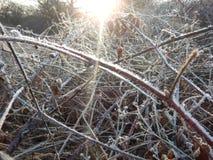 在一棵冻草的早晨霜 免版税库存照片
