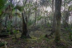 在一次中央佛罗里达远足的森林沼泽 库存照片