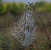 在一次中央佛罗里达远足的湿Spiderweb 免版税图库摄影
