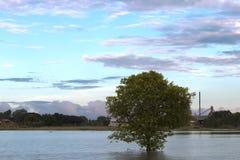 在一次洪水的一棵树在磨房附近 库存照片