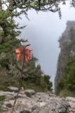 在一次远足期间的野花在桌山开普敦- 4 库存图片
