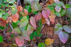 在一次远足的秋叶在默阿布附近 免版税库存照片