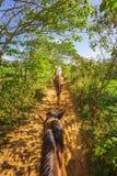 在一次马游览中的游人在Vinales国立公园,联合国科教文组织,比那尔德里奥省,古巴 免版税库存照片