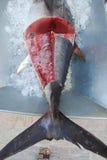 在一点的frech金枪鱼 免版税库存图片