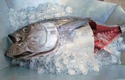 在一点的frech金枪鱼 库存照片
