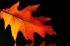 在一片五颜六色的秋天叶子的秀丽的仔细的审视 免版税图库摄影