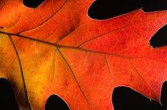 在一片五颜六色的秋天叶子的秀丽的仔细的审视 免版税库存图片