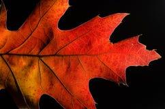在一片五颜六色的秋天叶子的秀丽的仔细的审视 库存照片